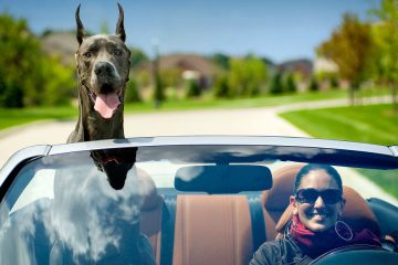 great dane travel