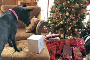 Great Dane Holiday Safety