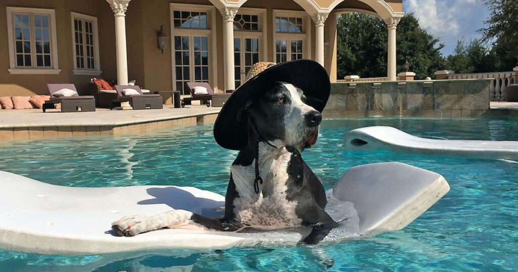 great dane water safety