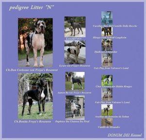 hype pedigree